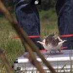 ネズミ ドローン