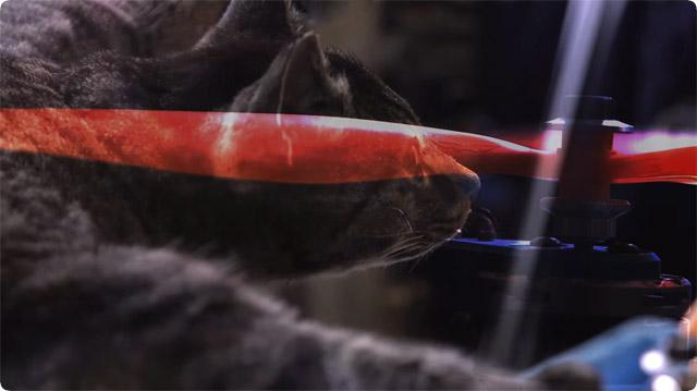 猫のドローン