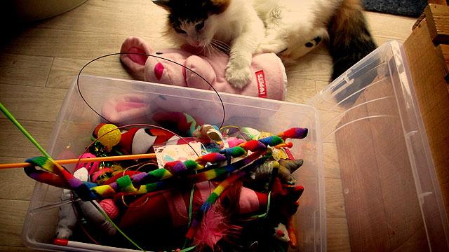 ペットボトルのキャップで猫のおもちゃを手作り