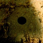 木工錐-切削屑