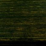 wood-2013-12-20 (12)