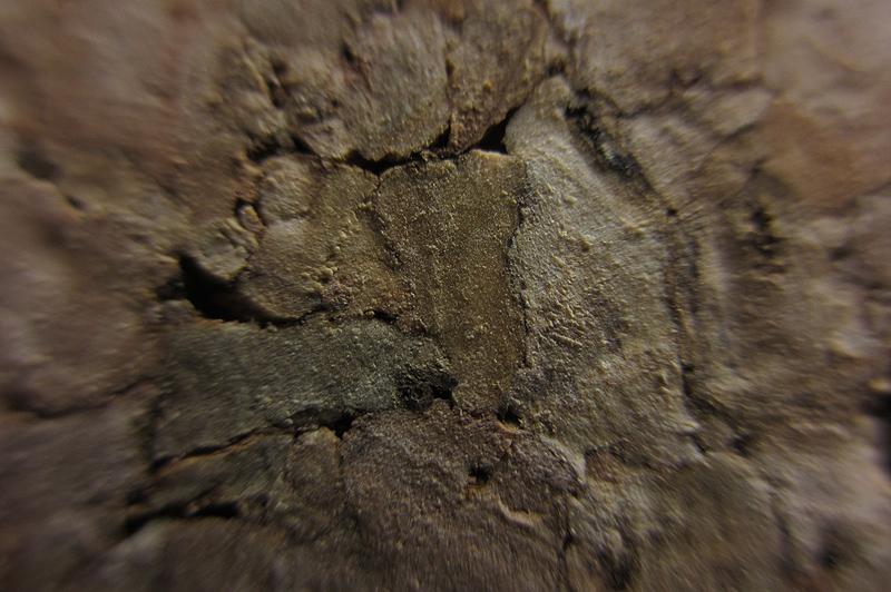 wood2013-2210 (6)